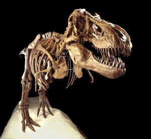 tyrannosaurus-rex-skeleto-004